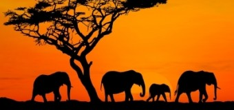 Sognare l'Africa