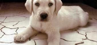 Sognare un cane, cosa significa ?