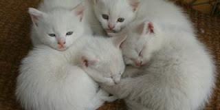 Sognare Gatti, significato ed interpretazione