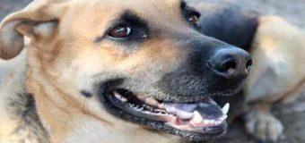 Sognare cane: Significato, interpretazione e numeri al lotto