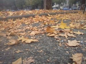 Sognare di spazzare foglie