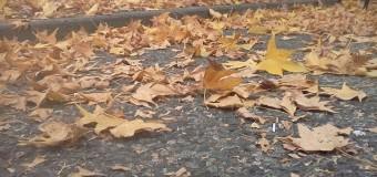 Sognare di spazzare foglie secche ed acqua piovana