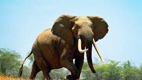 Sognare elefante: Significato, interpretazione e numeri al lotto