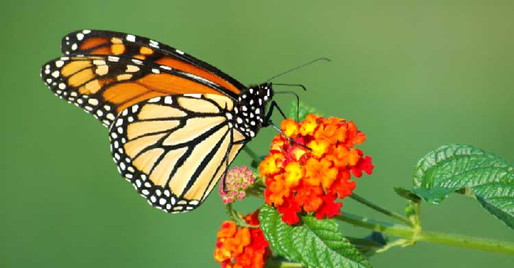Sognare farfalle