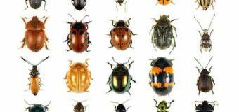 Sognare degli insetti: Significato, interpretazione e numeri al lotto