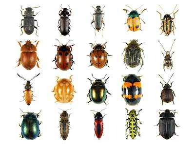 Sognare insetti
