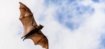 Sognare pipistrelli: Significato, interpretazione e numeri al lotto