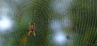 Sognare ragni e ragnatele: Significato, interpretazione e numeri al lotto