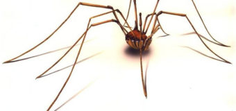 Sognare ragni, cosa significa? Scopriamolo insieme