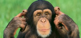 Sognare una scimmia: Significato, interpretazione e numeri al lotto