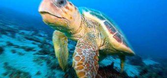 Sognare tartarughe: Significato, interpretazione e numeri al lotto