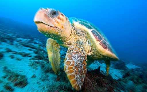 Sognare tartarughe