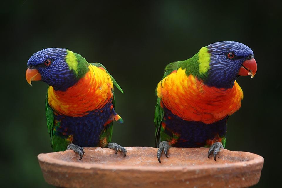 Sognare un pappagallo