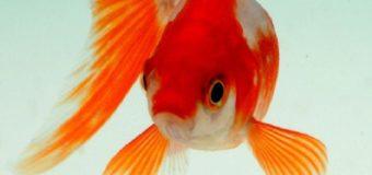 Sognare un pesce: Significato, interpretazione e numeri al lotto
