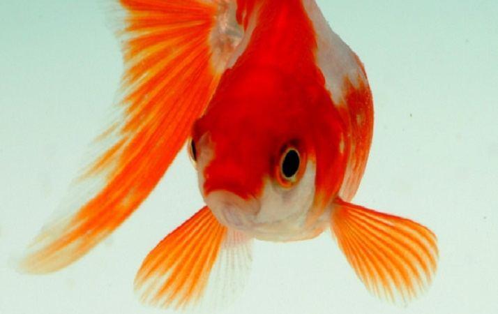 Sognare un pesce
