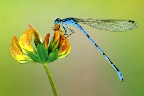 Sognare una libellula