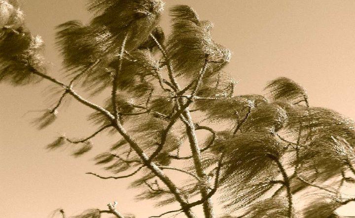 Sognare vento