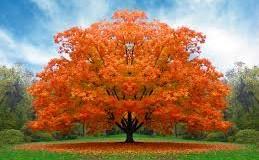 Sognare un albero: salice, palma e quercia cosa significano ?