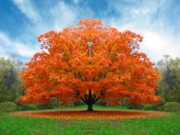 Sognare un albero