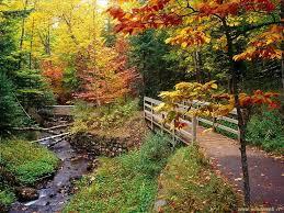 Sognare l'autunno