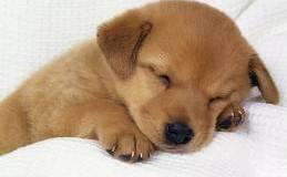 Sognare un cane