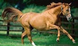 Sognare un cavallo: sella e redini