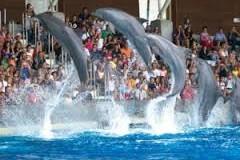 Sognare delfini: interpretazione e significato