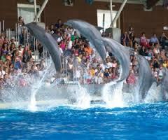 Sognare delfini