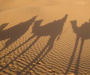 Sognare il deserto