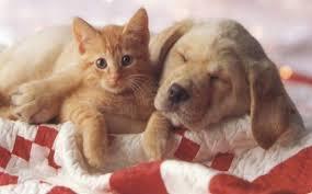 Sognare Animali
