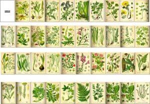 piante rituali