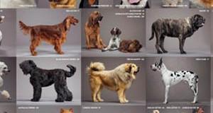 Sognare Cani: significato ed interpretazione