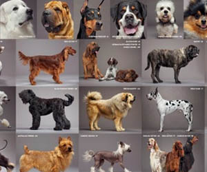Sognare razze di cani