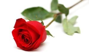 Sognare una rosa