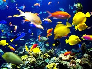 Sognare pesci