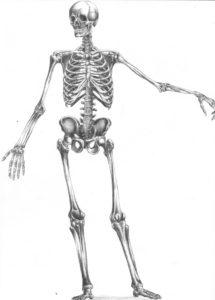 Sognare uno scheletro