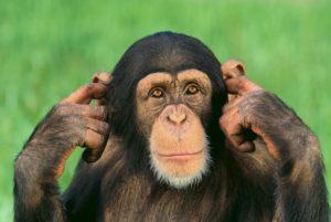 Sognare una scimmia