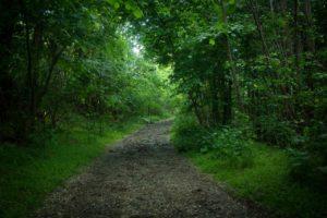 sognare sentiero