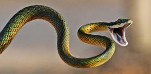 Sognare un serpente