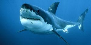 Sognare uno squalo