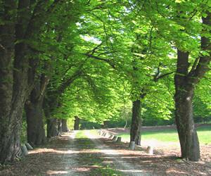 sognare un bosco