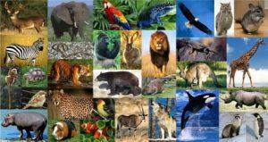 sogni ricorrenti animali