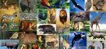 Sogni ricorrenti: Gli animali